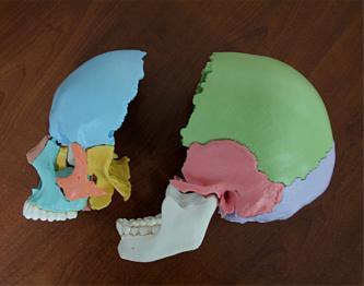 orthpédie dento faciale Caen